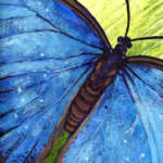 Beautiful Butterflies with Catherine Brassard......Members Only Morning Workshop